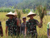 Dorong Ketahanan Pangan, TNI AD Sinergi Dengan Petani