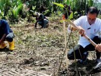 Lembaga Amphibi Tanam Mangrove Bersama Presiden Joko Widodo Untuk Pemulihan Lingkungan